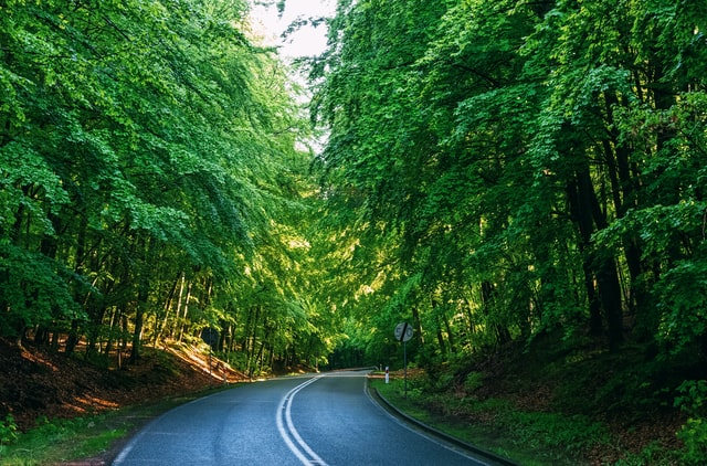 road through the forests